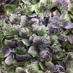 Искусственная зелень 55-D Базилик фиолетовый в модулях для изгороди