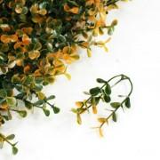 Элемент модульной зеленой изгороди Самшит Faulkner оранжевый