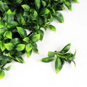 Элемент зеленой изгороди Лавр Нобилис