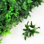 Элемент зеленой изгороди Плющ зеленый