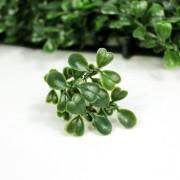 Элемент зеленой изгороди Самшит темно-зеленый