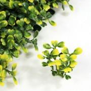 Элемент зеленой изгороди Самшит желто-зеленый