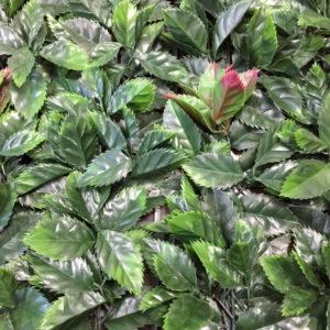 Искусственная зелень 2-G Фотиния красно-зеленая в модулях для изгороди
