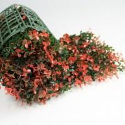 Искусственная трава в рулонах из модулей Самшит Фолкнер красный