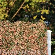 Искусственная зелень Самшит зелено-розовый для вечно-зеленой изгороди и забора