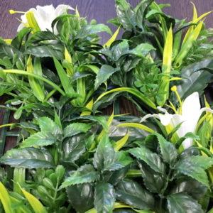 Искусственная зелень Лилии белые в модулях для изгороди