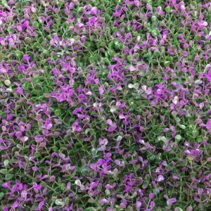 Искусственная зелень Самшит Faulkner фиолетовый в модулях для изгороди