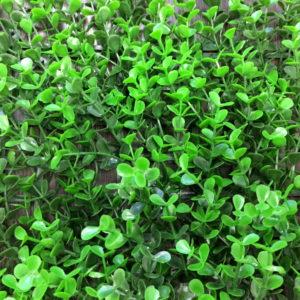 Искусственная зелень 6-DG Самшит Faulkner зеленый в модулях для изгороди