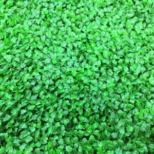 Искусственная зелень 1-LG Самшит светло-зеленый в модулях для изгороди
