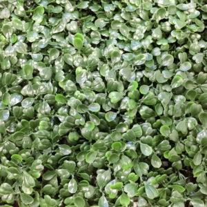 Искусственная зелень 1-DG Самшит темно-зеленый в модулях для изгороди