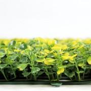 Высота элементов зеленой изгорди Самшит желто-зеленый 5 см