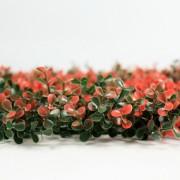 Высота покрова модульной зелени Самшит Фолкнер красный 5 см