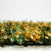 Высота покрова модульной зелени Самшит Фолкнер оранжевый 5 см