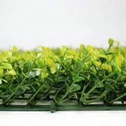 Высота покрова модульной зелени Самшит Фолкнер желтый 5 см