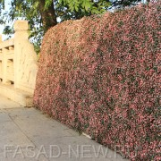 Забор из искусственной зелени Самшит зелено-розовый